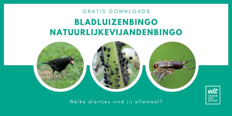 Bladluizenbingo